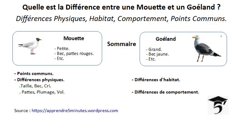 Différences entre une Mouette et un Goéland.